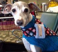 spencer west coast dog